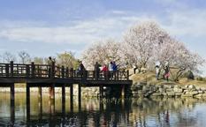 پارک Yuan Ming Yuan