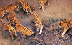 پارک سافاری شنزن ، باغ وحش بدون قفس در چین