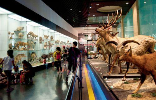 بازدید از موزه ملی چین در پکن